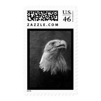 Eagle calvo grafito dibujado mano
