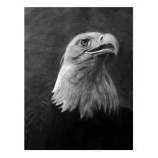 Eagle calvo grafito dibujado mano postales