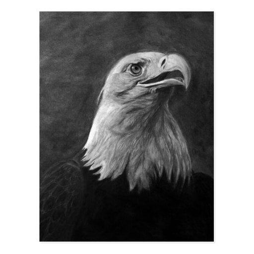 Eagle calvo, grafito dibujado mano tarjetas postales