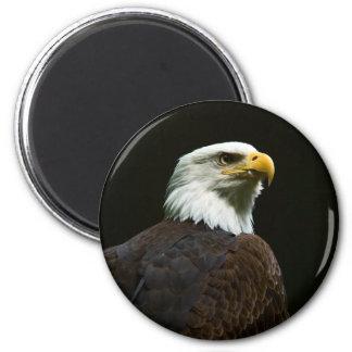Eagle calvo imán para frigorifico