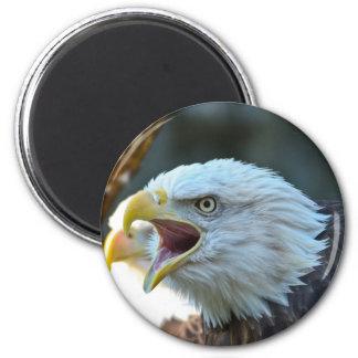 Eagle calvo imán redondo 5 cm
