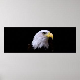 Eagle calvo - impresión del poster de American Eag