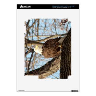 Eagle calvo iPad 3 pegatinas skins