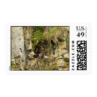 Eagle calvo joven Castle Rock isla de Shumagin