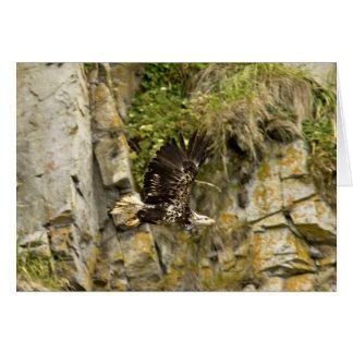 Eagle calvo joven Castle Rock isla de Shumagin Felicitación