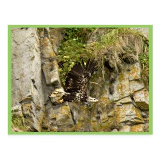 Eagle calvo joven Castle Rock isla de Shumagin Tarjeta Postal