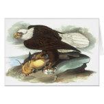 Eagle calvo, Juan Audubon Tarjeton