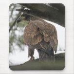 Eagle calvo (juvenil) alfombrilla de ratón