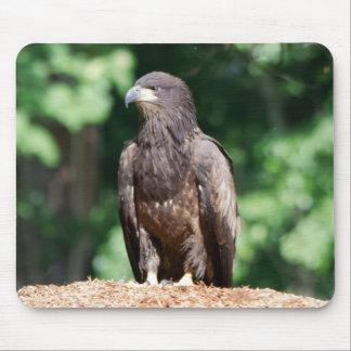Eagle calvo juvenil que se sienta en el pajote alfombrilla de ratón