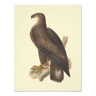 """Eagle calvo (leucocephalus de Haliaetos) Invitación 4.25"""" X 5.5"""""""