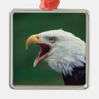 Eagle calvo (leucocephalus del Haliaeetus) Adorno Cuadrado Plateado