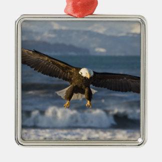 Eagle calvo, leucocephalus del Haliaeetus, home Adorno Cuadrado Plateado