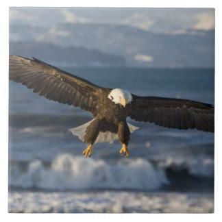 Eagle calvo, leucocephalus del Haliaeetus, home ru Teja Ceramica