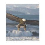 Eagle calvo, leucocephalus del Haliaeetus, home ru Blocs
