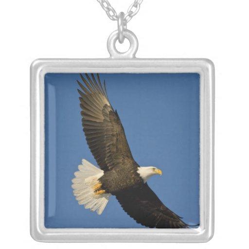 Eagle calvo, leucocephalus del Haliaeetus, home ru Pendiente