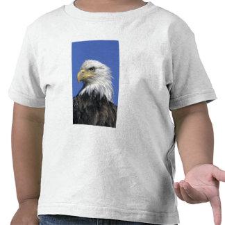Eagle calvo, (leucocephalus del Haliaeetus), Camiseta