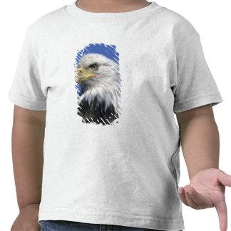 Eagle calvo, (leucocephalus del Haliaeetus), Camisetas