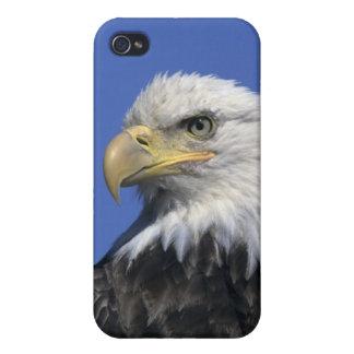 Eagle calvo, (leucocephalus del Haliaeetus), salva iPhone 4 Carcasa