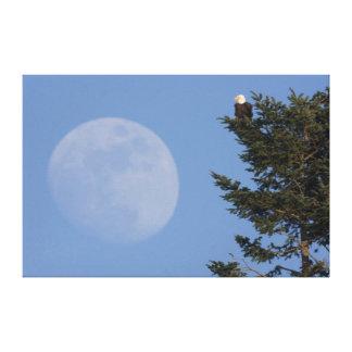 Eagle calvo, Luna Llena de levantamiento Impresiones En Lona
