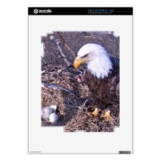 Eagle calvo majestuoso calcomanías para iPad 2
