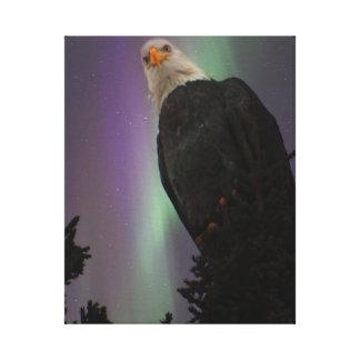 Eagle calvo majestuoso entre la lona de la aurora impresión en lona
