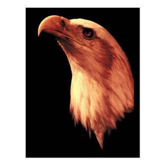 Eagle calvo mira para arriba postal