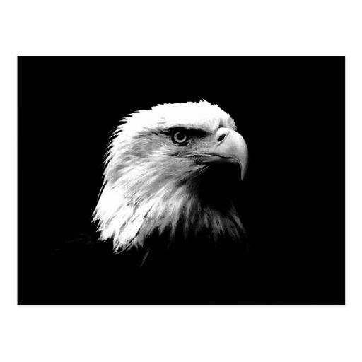 Eagle calvo negro y blanco tarjetas postales