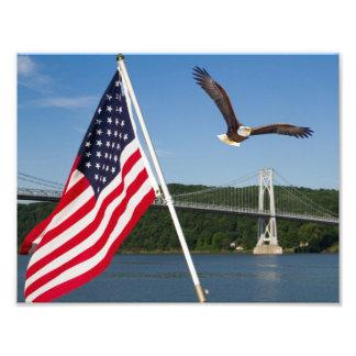 Eagle calvo (orgullo americano) fotografía