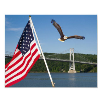 Eagle calvo (orgullo americano) fotografías