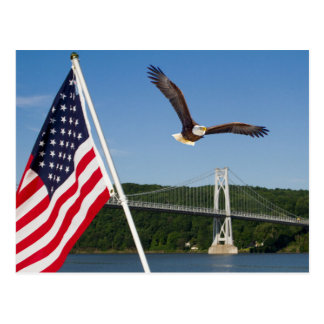 Eagle calvo (orgullo americano) tarjeta postal