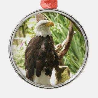 Eagle calvo ornamento para arbol de navidad