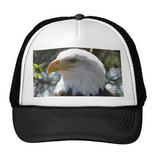 Eagle calvo - pájaro nacional de los Estados Unido Gorros Bordados