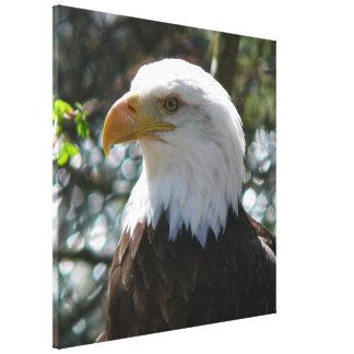 Eagle calvo - pájaro nacional de los Estados Unido Impresiones De Lienzo