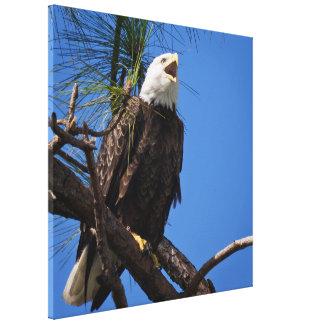 Eagle calvo - pájaro nacional de los Estados Unido Impresiones En Lienzo Estiradas