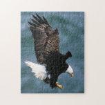 Eagle calvo - pájaro nacional de los Estados Unido Puzzles Con Fotos