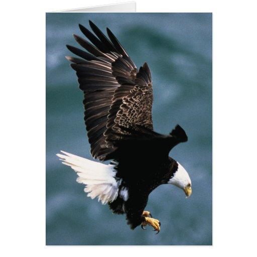 Eagle calvo - pájaro nacional de los Estados Unido Tarjeta