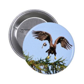 Eagle calvo perseguidor por un mockingbird pins