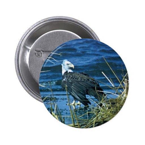 Eagle calvo pin