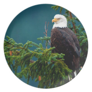 Eagle calvo platos de comidas