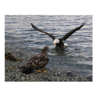Eagle calvo que aterriza en la playa postal