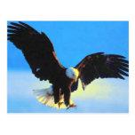 Eagle calvo que aterriza la postal