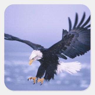 Eagle calvo que aterriza las alas separadas en una pegatina cuadrada
