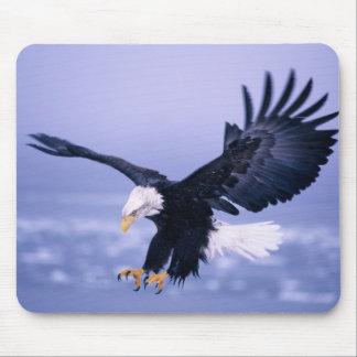 Eagle calvo que aterriza las alas separadas en una alfombrillas de raton