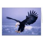 Eagle calvo que aterriza las alas separadas en una tarjeta