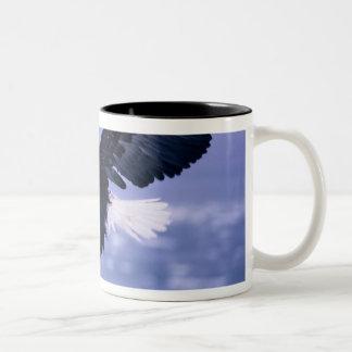 Eagle calvo que aterriza las alas separadas en una taza de café de dos colores