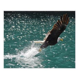 Eagle calvo que coge un pescado fotografias