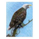 Eagle calvo que grita en un árbol postal