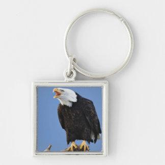 Eagle calvo que llama, home run, Alaska, Haliaetus Llavero Cuadrado Plateado