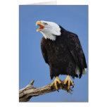 Eagle calvo que llama, home run, Alaska, Haliaetus Tarjeta De Felicitación