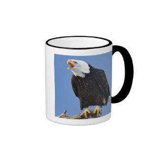 Eagle calvo que llama, home run, Alaska, Haliaetus Taza De Dos Colores